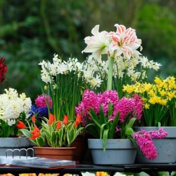 Пет прости правила за засаждане на цветя