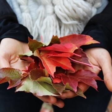 Есен с вкус на смокини и боровинки