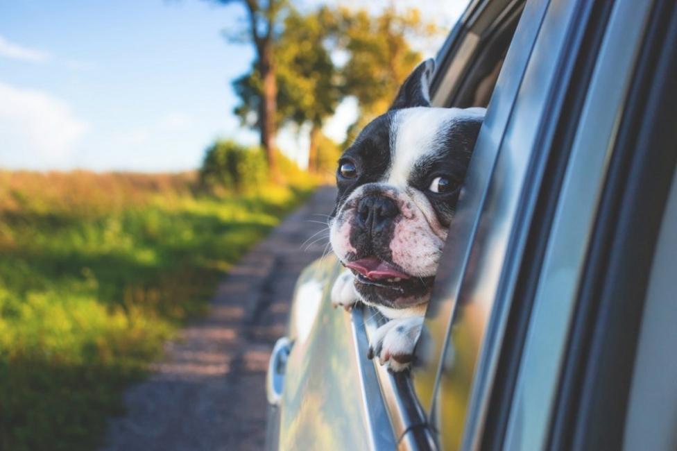 Какво е да си Куче според китайския хороскоп?