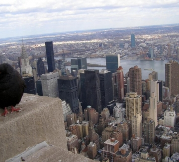 Ню Йорк, чудовищният