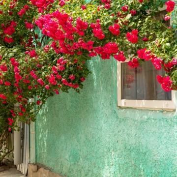 Тайната градина: Розата – да, тя!