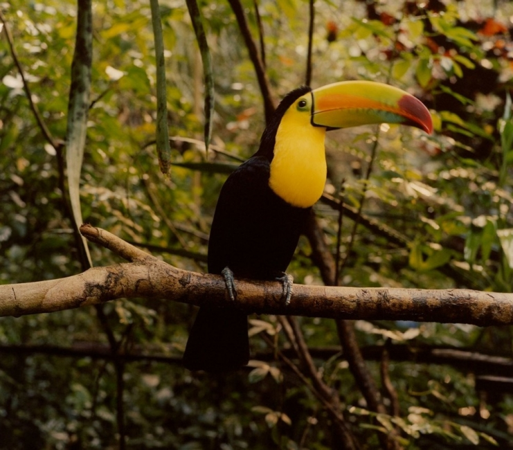 Известен моден фотограф издава биоразградима книга