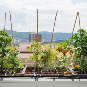 Как да си направим кулинарна градинка на балкона?