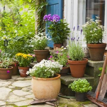 Тайната градина: лятна грижа за растенията на балкона