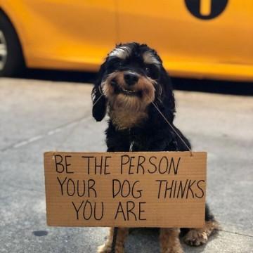 Запознайте се с първото протестиращо куче