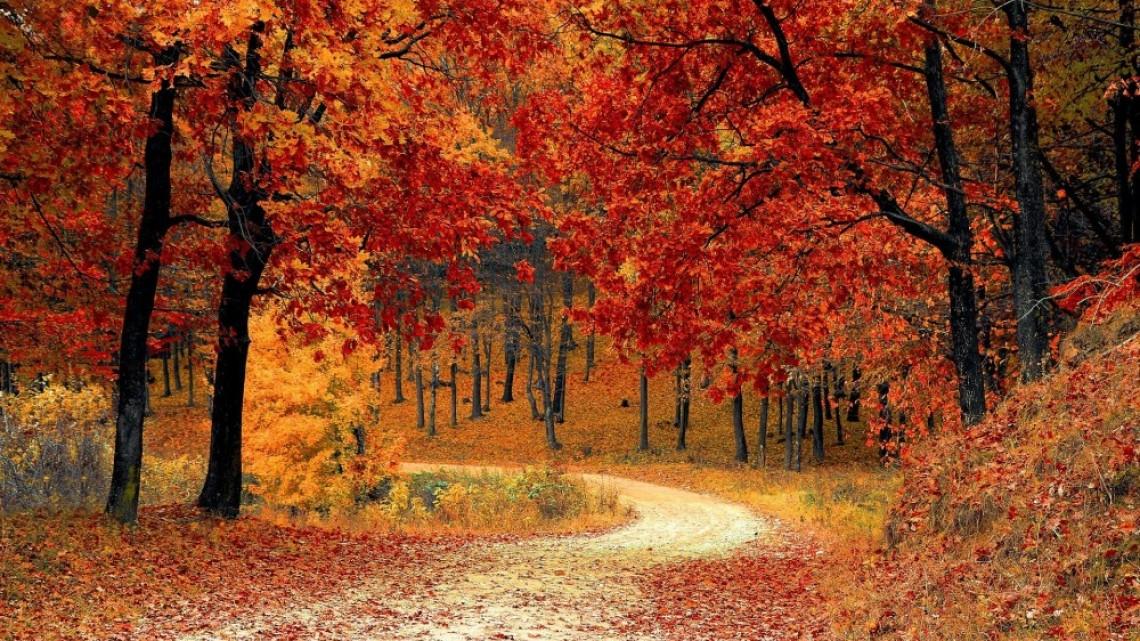 5 български стихотворения за есента