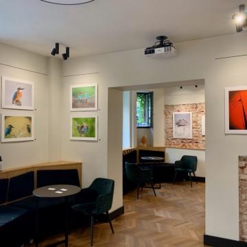 Как една галерия пренася изкуството у дома