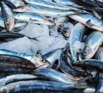 Откъде да си вземем прясна риба за Никулден в София?