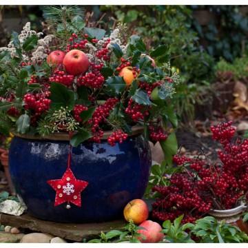 Как да си направим зимна градина в саксия?
