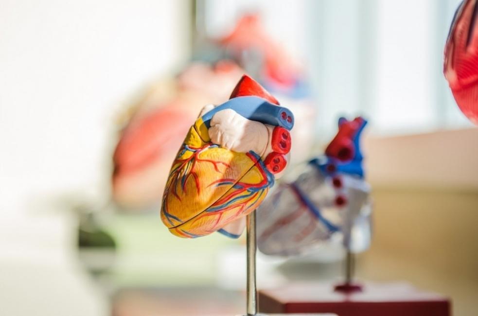 През 2021 ще можем да си купим изкуствено сърце