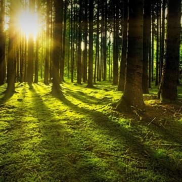 Как Ikea спаси 44 хил. декара гора