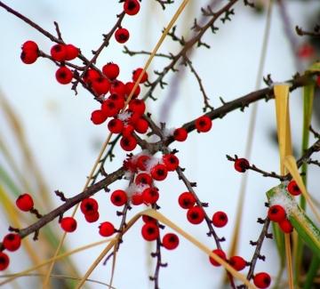 Чудодейно растение абсорбира замърсяването във въздуха