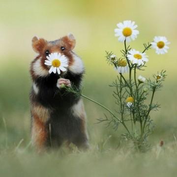 Ето какво правят дивите животни, когато са сами