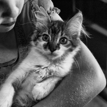Приключенията на едно 4-годишно дете и котката Рогоцветка в локдаун
