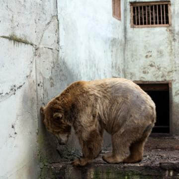 Животните у нас – не в зоопарк, а в бетонен затвор