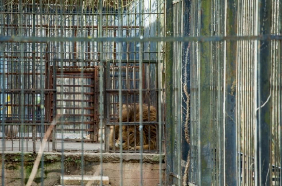 Не зоопарк, а затвор