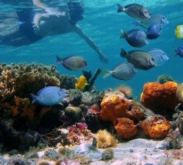 Защо опазването на океаните е толкова важно?