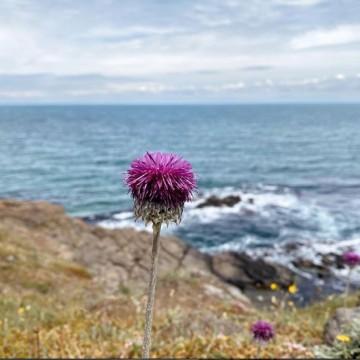 Да спасим Синеморец – да застанем на страната на природата