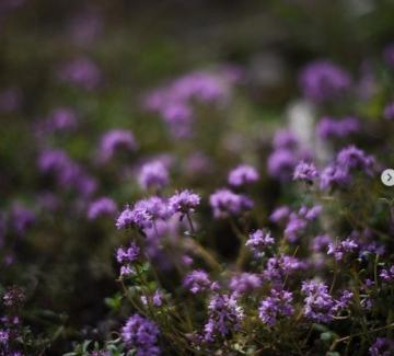 Една магична седмица: Фестивалът на дивите цветя