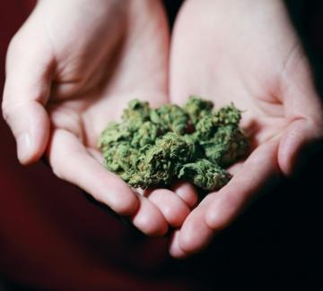 Още една страна разреши употребата на марихуана