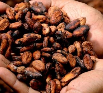 Отпадъците от какао се превръщат в ток в Африка
