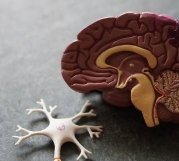 Мозъкът ни се променя, когато се оплакваме