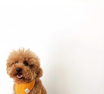 Как да поглезите себе си и кучето? Отговорът ви очаква на есенния Mish Mash Fest