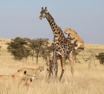 Една седмица в Африка в снимки