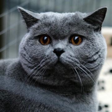 """Изложба на котки в музея """"Земята и хората"""" в София"""
