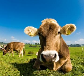 Какво знаем за млякото, което пием?