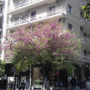 Момичетата от града@Солун: модни вдъхновения