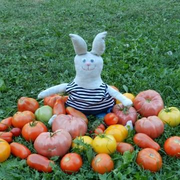 Мария Донева и нейните зайци-мечтатели