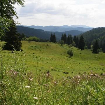 Ненагледните Родопски пейзажи