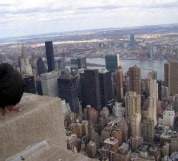 Живея в Ню Йорк