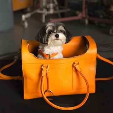 Чанта за кучета