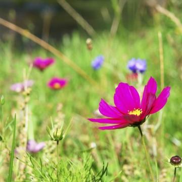 2 специални рецепти за пролетна грижа за тялото