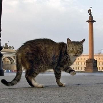 Котките на Ермитажа – на стража за изкуството