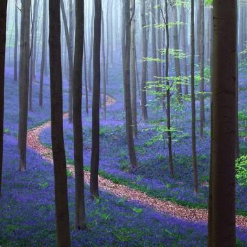 Магическите гори на Hallerbos