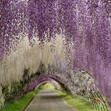 Едни от най-красивите цветни и дървесни тунели в света