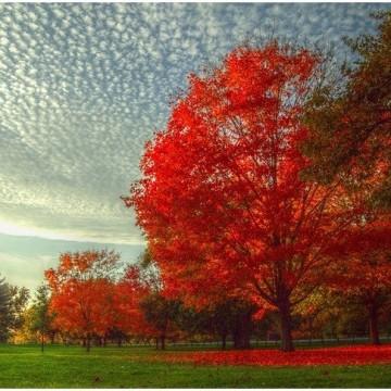 Прекрасни снимки, които улавят магията и красотата на есента