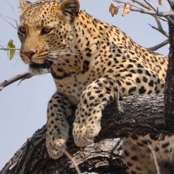Намибия, част първа: Среща със зверовете