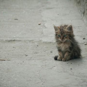 4 октомври е световен ден за защита на животните