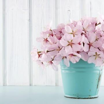 Знание за цветята