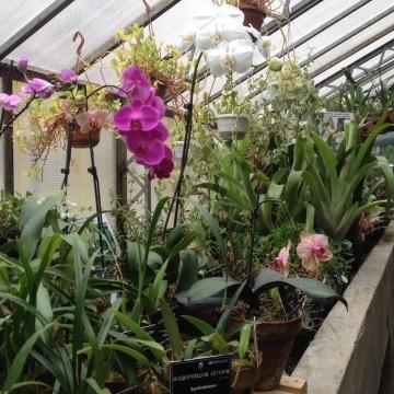На разходка в Университетската ботаническа градина