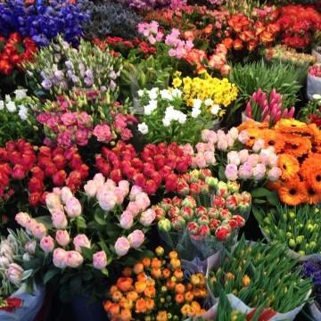 На разходка из пазара за цветя в Амстердам