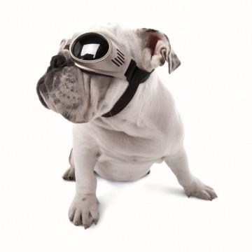 Слънчеви очила за кучета