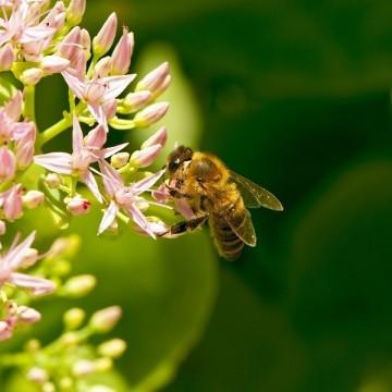 Да вдигнем тонуса и имунитета си с пчелни продукти