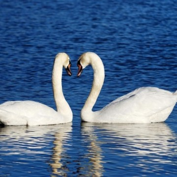 За несъвършената двойка