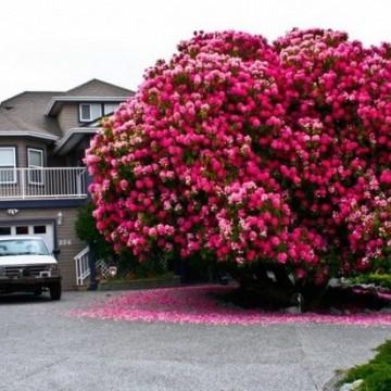 Ето това са 15 от най-красивите дървета в света!