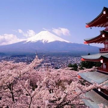 Сезонът на цъфналите вишни в Япония започна